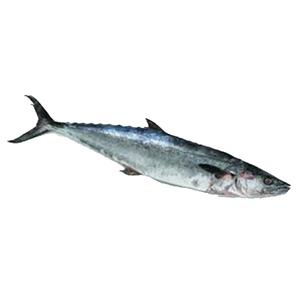 Fresh King Fish Big UAE 500g