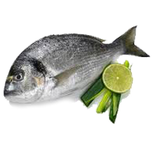 Fresh Seabream 400 600 Turkey 500g