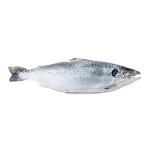 Fresh Norwegian Salmon 4/5 500g