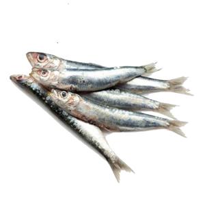 Fresh Sardines Small UAE 500g