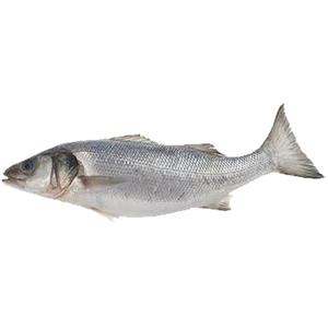 Fresh Seabass UAE 500g