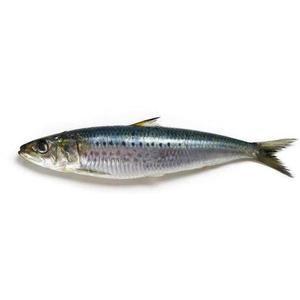 Sardines Big UAE 1kg