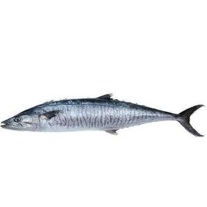 King Fish UAE 500g