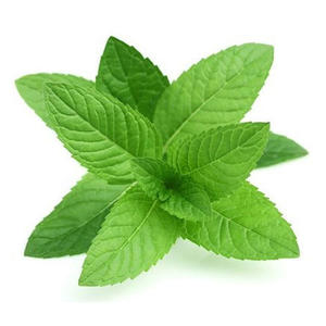 Mint Leaves Local 1bunch
