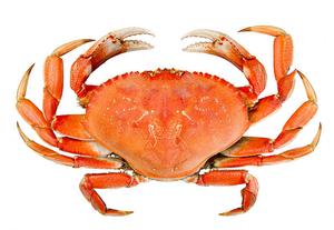 Crab 1kg