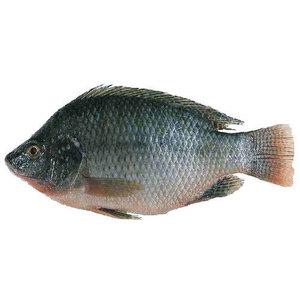 Tilapia Fish Egypt 500g