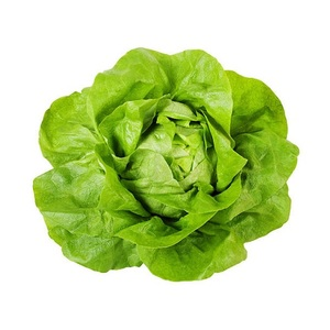 Lettuce Boston Organic UAE 1pc