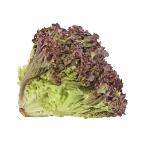 Lettuce Lollo Ross Organic UAE 1pc