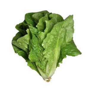 Lettuce Romaine Organic UAE 1pc