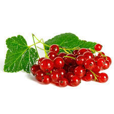 Currants Red Netherlands 1pkt
