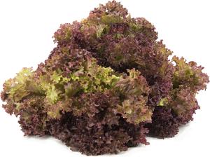 Lettuce Lollo Rosso Organic UAE 500g