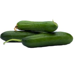 Organic Cucumber 1kg