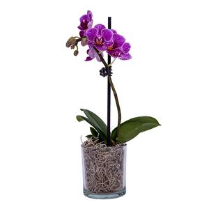 Indoor Plants 1pc
