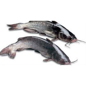 Cat Fish Fresh 500g