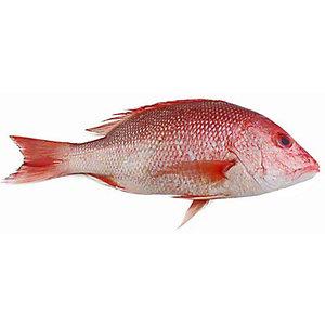 Red Snapper Fresh 500g