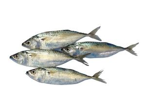 Mackerel Small 500g