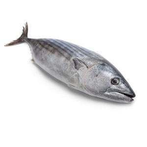Tuna Small per piece 1pc