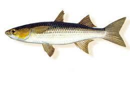Bori Egypt Fish 500g