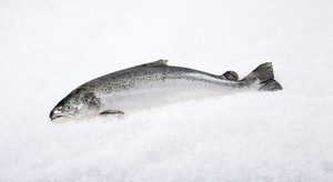 Shaam Fish 1kg