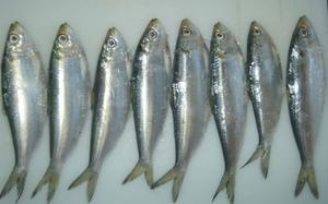 Aifa Fish 500g