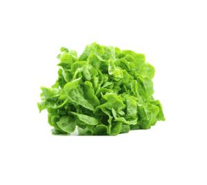 Lettuce Green Holland 500g