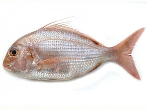 Sea Bream Fresh 500g