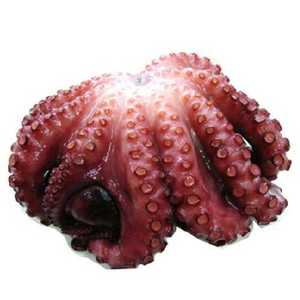 Frozen Salted Whole Octopus 1kg