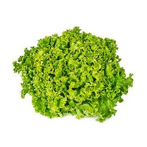 Lollo Bionda Lettuce UAE 150-200g