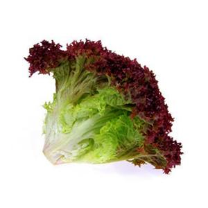 Lollo Rosso Lettuce USA 150-200g