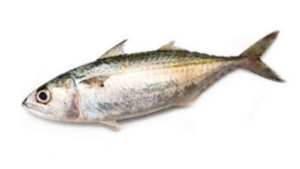 Ayla Para Fish 500g
