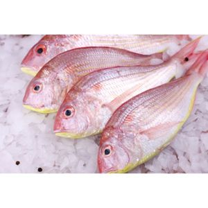 Wild Sultan Ibrahim Fresh Cleaned UAE 500g