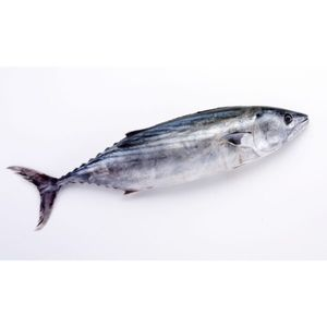 Wild Tuna Black (Non- Sushi Grade) Fresh Cleaned UAE 500g