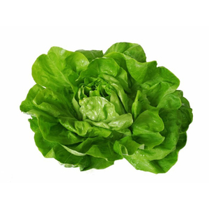 Lettuce Boston Netherland 180g-220g pc