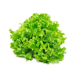 Lettuce Lollo Green Bionda Netherland 180g-220g pc