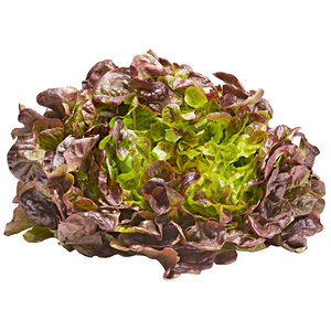 Lettuce Oakleaf Red Spain 180g-220g pc