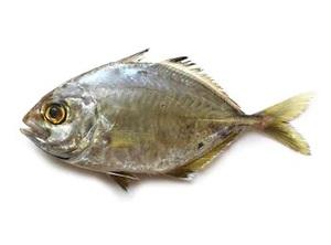 Jash Fish 500g