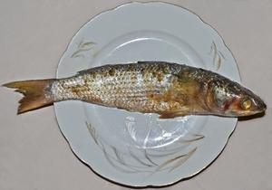 Egypt Salted Fesikh 1kg