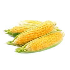 Sweet Corn Iran 550g-650g
