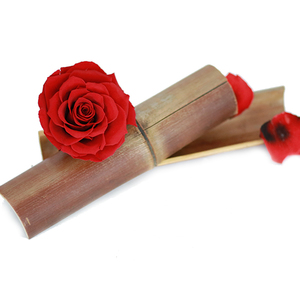 Allure Of The Red Rose Romance 1pc