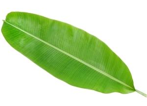 Banana Leaves 1pc
