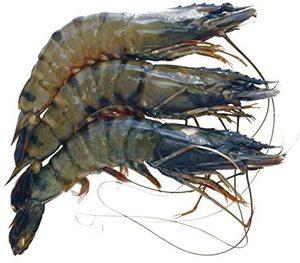 Tiger Shrimp 500g