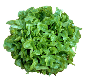 Lettuce Oakleaf UAE 500g