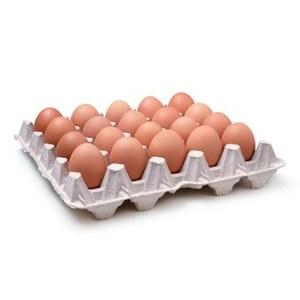 Free Range Eggs 15pcs/tray