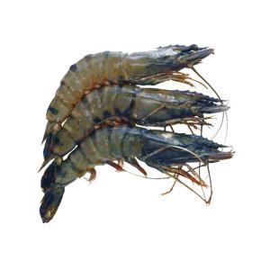 Shrimps U/15 500g