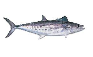 Mackerel 500g