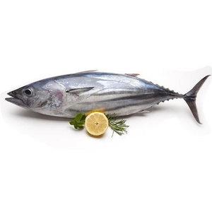 Tuna Fish - Sadah 500g