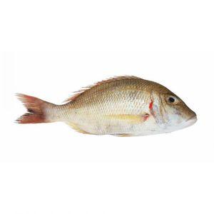Sheri Fish 500g