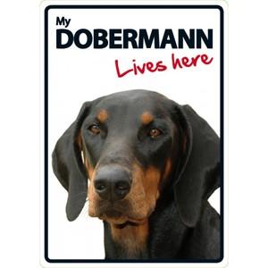 Magnet & Steel My Dobermann Lives Here Sign 21x15cm
