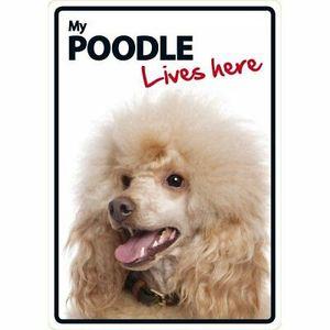 Magnet & Steel My Poodle Lives Here Sign 21x15cm