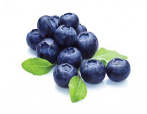 Blueberry Holland 1pkt